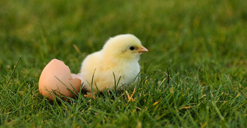 Are-eggs-harmful-to-our-health