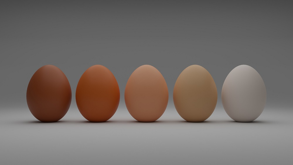 The Truth Behind the Egg Industry
