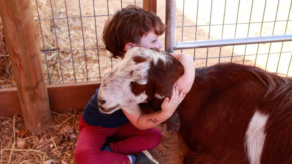a small child hugging a goat